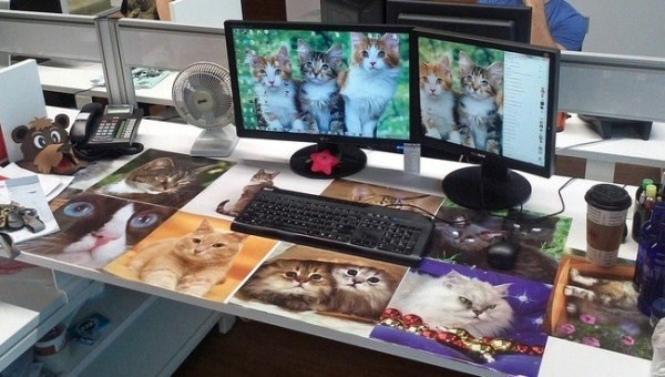 Cubicle that has been taken over by cat pictures