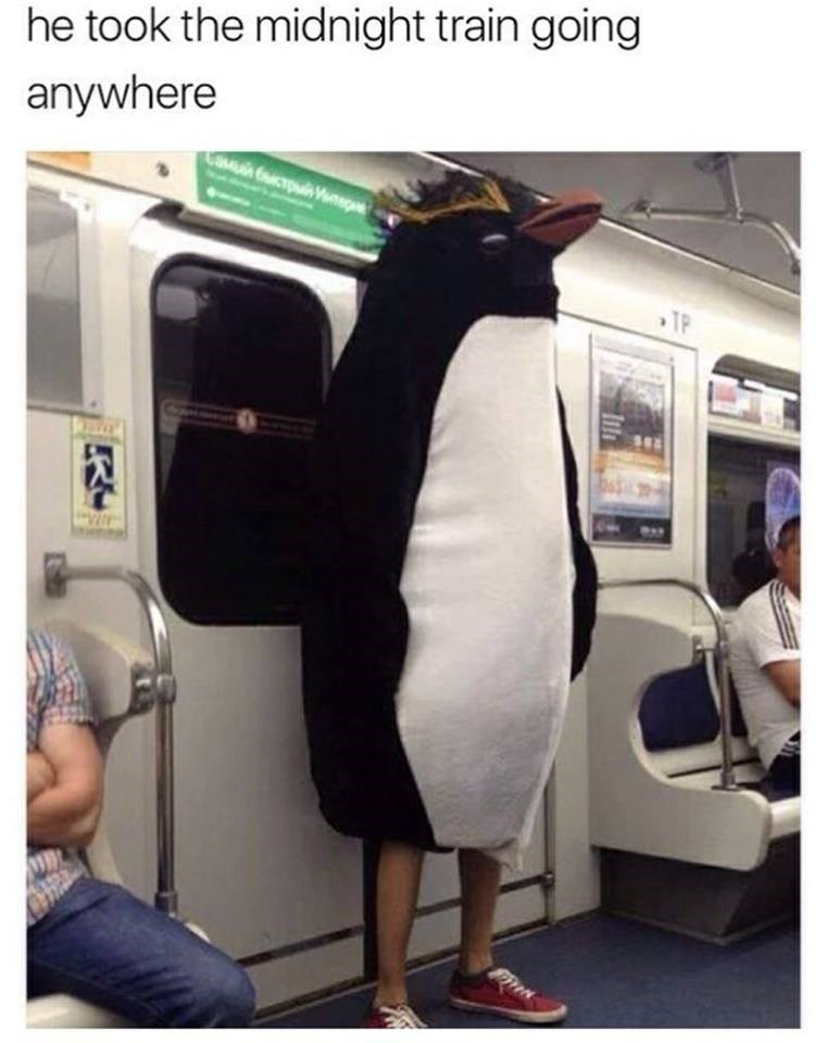 "Funny meme, image of a man in a penguin costume riding a train, song lyrics from Journey's song ""Don't Stop Believing"" - he took the midnight train going anywhere."
