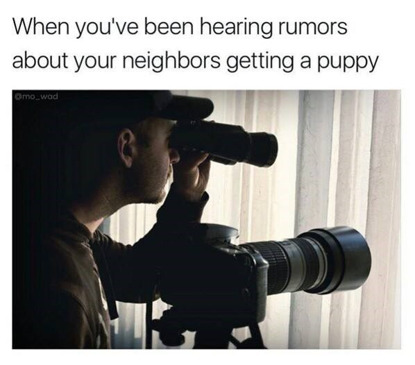 When you hear rumors of your neighbor getting a puppy, person staring out of a window with binoculars and scope, funny meme.