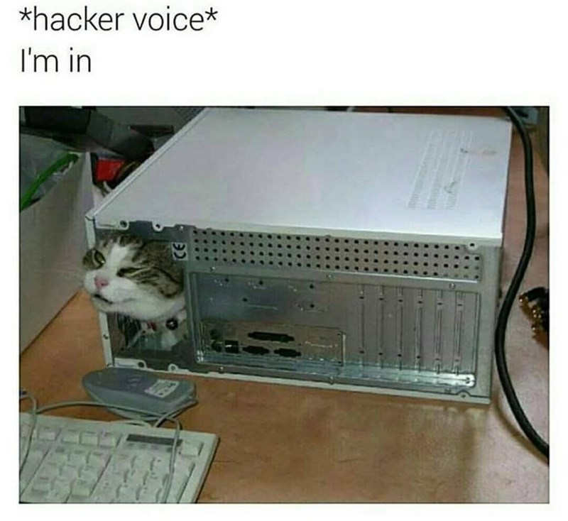 "Image of a cat coming out of a computer, joke is that the cat is a hacker and says ""i'm in"" - funny meme."