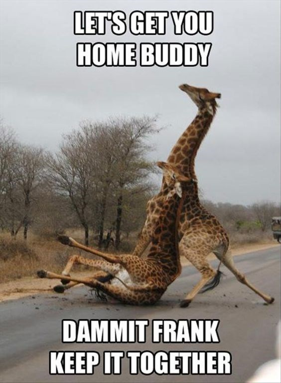 Funny giraffe meme of what looks like a drunk giraffe named Frank.