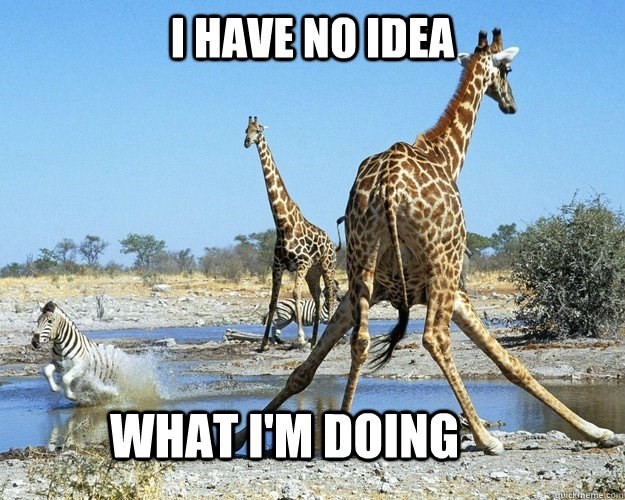 Funny giraffe that has no idea what he is doing.