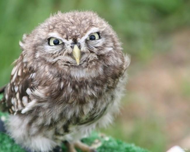 funny owl - Owl - yRiu