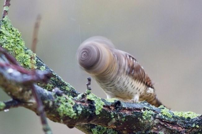 funny owl - Sea snail
