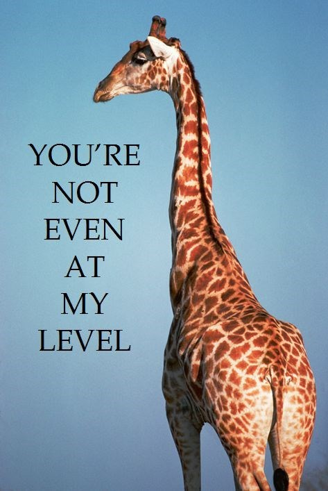 Giraffe - YOU'RE NOT EVEN AT MY LEVEL