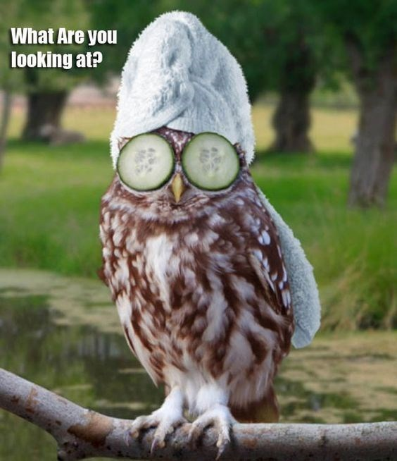 funny owl - Owl - What Are you looking at?
