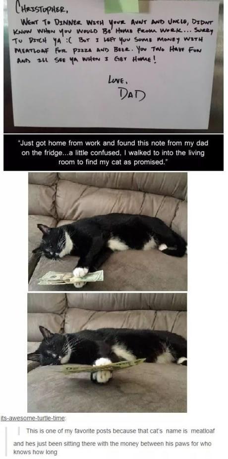 lazy Cats funny - 9034742528