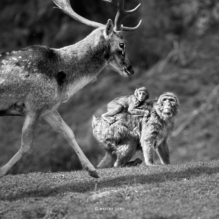 Wildlife - MARINA DANO MARINA CANO