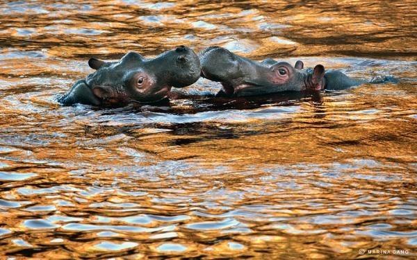 Wildlife - SWARINASGANG