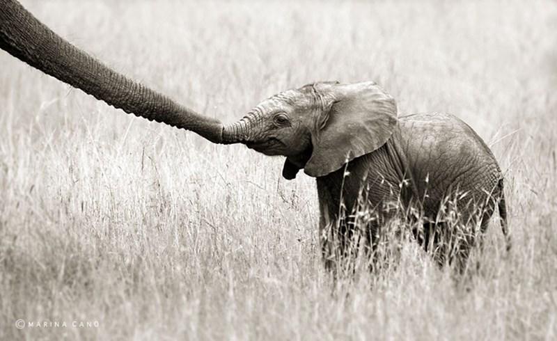 Elephant - MARINA CANO