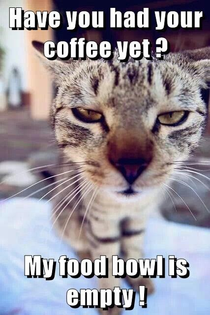 lolcats coffee lol at funny cat memes funny cat pictures with