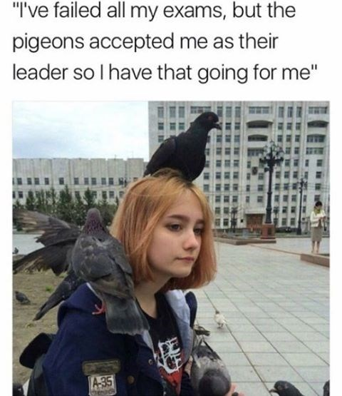 Sad meme of girl who failed her exams and is no depressingly sitting under a gray sky and tons of pigeons on her, captioned that the birds have accepted me as their leader.