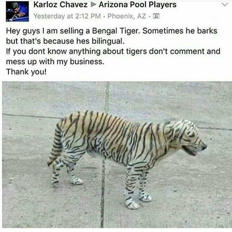 Funny picture of a dog that's been painted like a Bengal Tiger and someone is jokingly trying to sell it online.