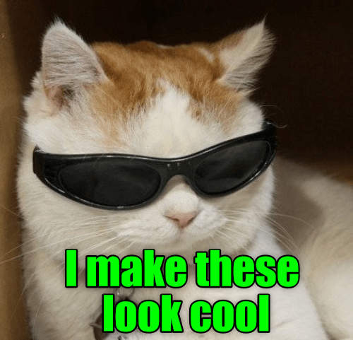 Chill looking cat with shades made into a meme captioned 'the difference between meme and you is that I make these look good.'