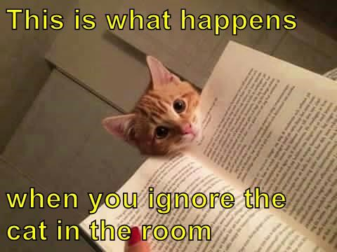 Cat meme of trying to read with kitty peaking on - captioned that this is what happens when you ignore the cat.