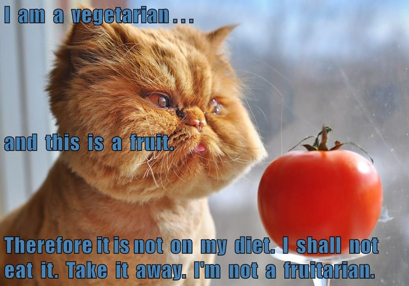 Meme of a cat that is a vegetarian, not a fruitarian.