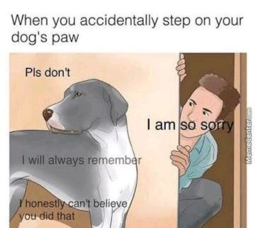 Funny dog meme about how horrible it is when you accidentally step on your dog's paw, and you feel like they will never forget or forgive you.