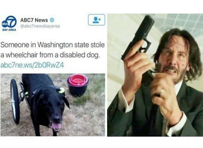 Funny meme: screen shot of news report about someone stealing a wheelchair from a disabled dog, reaction is that of John Wick with a gun, because this whoever stole the wheelchair deserves to die.