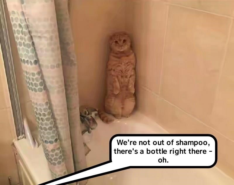 Cat meme of a cat hiding in the bathtub corner and a comment about how we are not out of shampoo.