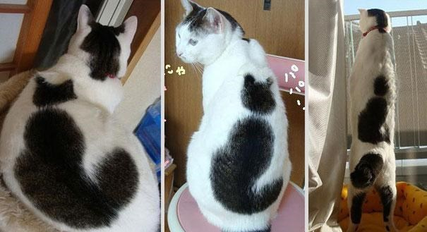 Cat - らゃ
