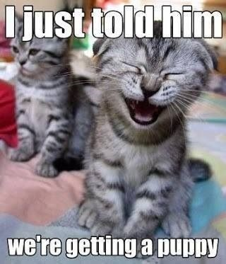 Picture of a cat laughing while he tells his brother that they are getting a dog and his brother is in the background looking sad