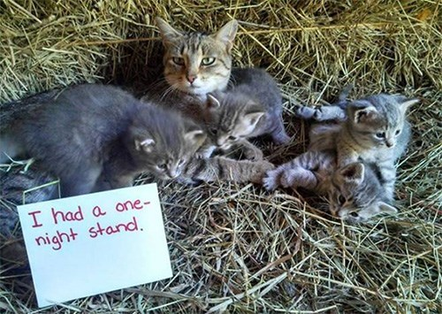 Cat - I had a one- night stand.