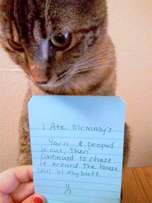 Cat - Ate Memmy's Vara itcut, theeoped Continued to chase it around the house Still in my butt. 11