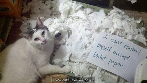 Cat - I cant control myself around toilet paper www.catshaming.co.uk