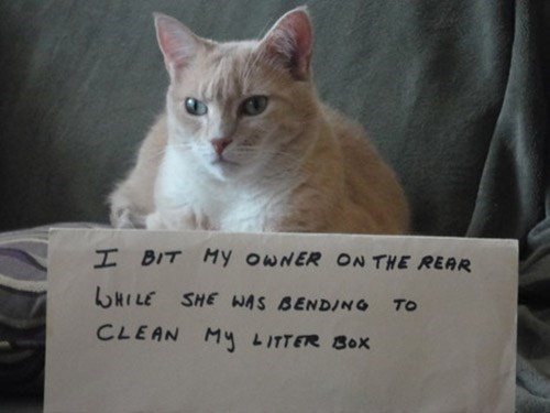 Cat - I BIT My OWNER ON THE REAR HILE SHE WAS BENDING TO CLEAN M4 LITTER BOx