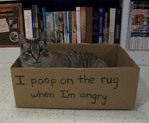Cat - I poop on the ruq when Im angry ANMA DRAGONBIDER STAND