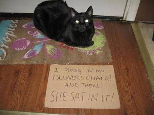 Cat - I PUKED IN MY OUNERS CHAIR! AND THEN SHESAT IN IT! ropict