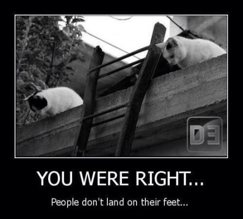 Panda - YOU WERE RIGHT... People don't land on their feet..