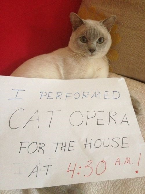 Cat - PERFORMED CAT OPERA FOR THE HOUSE AT 4:30 A. /