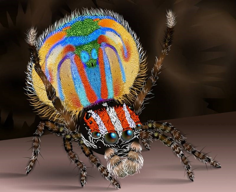 The most colorful spider ever with yellows, blues, red, and orange.