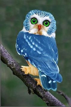 Very cute blue owl with green eyes and orange feet and nose.