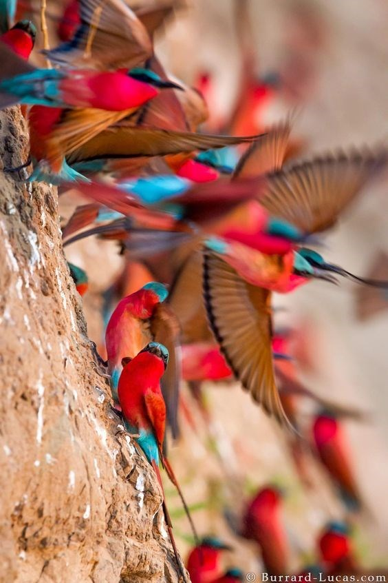 Colorful birds taking flight in a diagonally taken photograph.