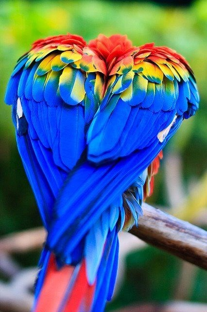 Heart shaped rainbow colored bird on a branch.