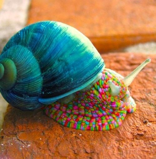 Candy colored snail on rough red rock texture.