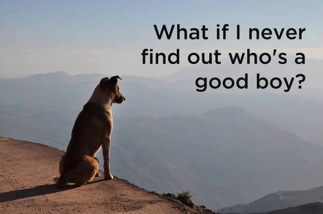dog looking at mountains in the distance dog memes shower thoughts