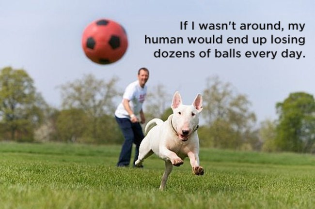 white dog chasing after red ball man has thrown shower thoughts dog memes