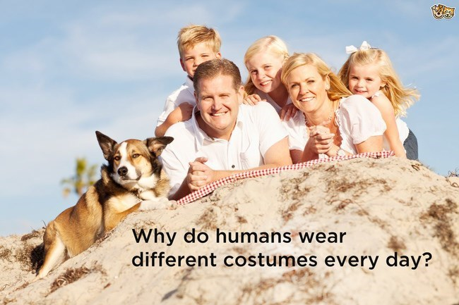 family posing on sand dune with dog shower thoughts dog memes