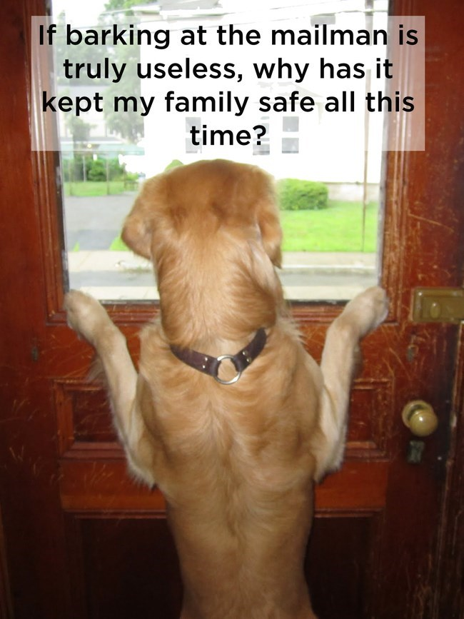 golden retriever standing at door looking out window shower thoughts dog memes