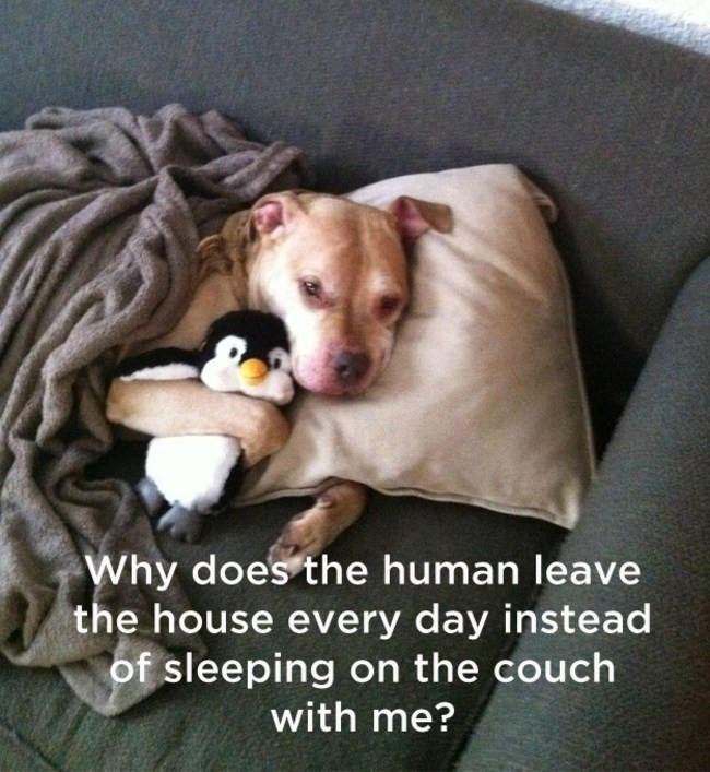 dog lying on couch with pillow and blanket hugging penguin toy shower thoughts dog memes