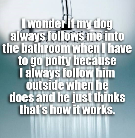 Funny shower thought meme of questioning if the dog follows you to the bathroom because you always follow him outside for the same purpose.