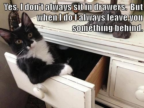 Cat meme of the most interesting kitty in the world sitting in a dresser drawer.