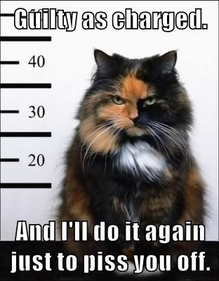 Cat mug shot meme - guilty as charged and would do it again if given the chance.