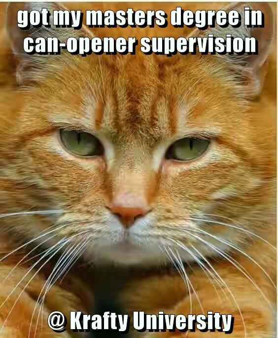 Krafty University cat meme of degree in can openers.