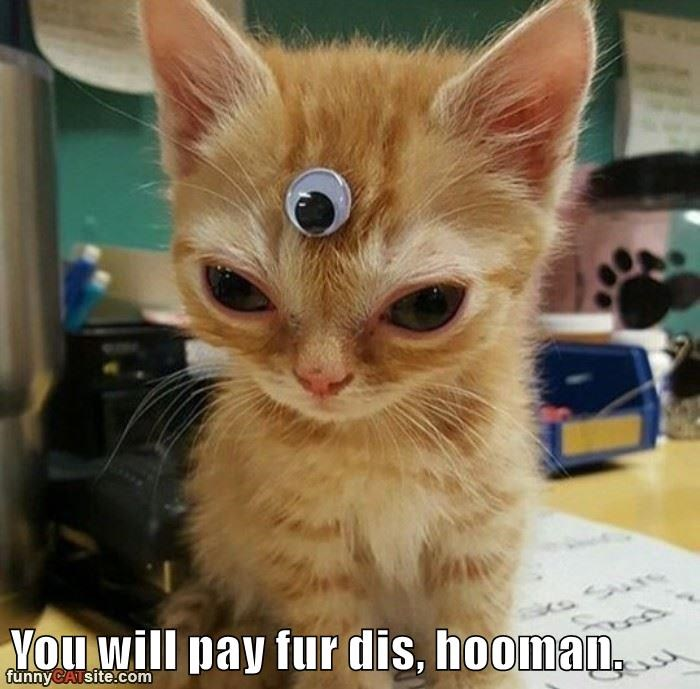 Funny picture of a cat with a third eye on his forehead and a threatening caption, as that is funny coming from such a small fur ball.