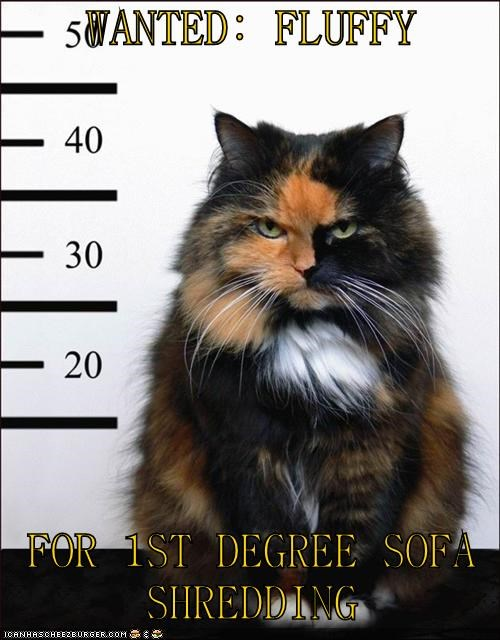 Funny cat meme of a cat's mug shot as if he has been arrested for sofa scratching.