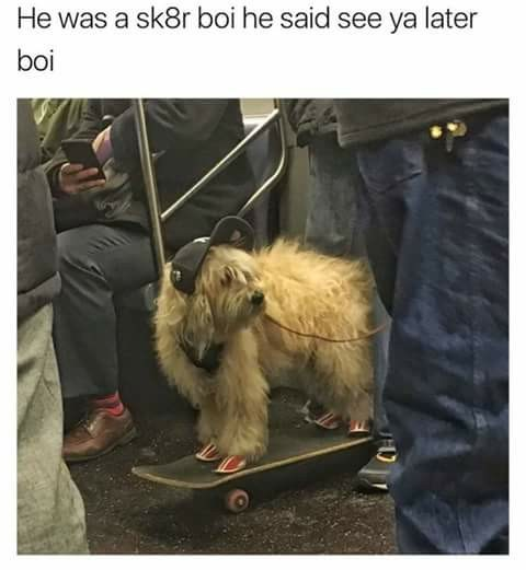 Funny dog meme with a photo of a dog on a skateboard, the text is the lyrics to sk8r boi by avril lavigne.